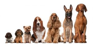 Show Dog Training @ Kingham Village Hall | Kingham | England | United Kingdom